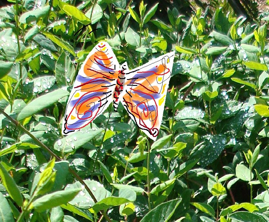 papallona.MPMartinez Herrero